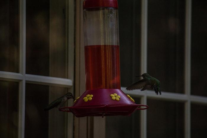 hummingbird1sm