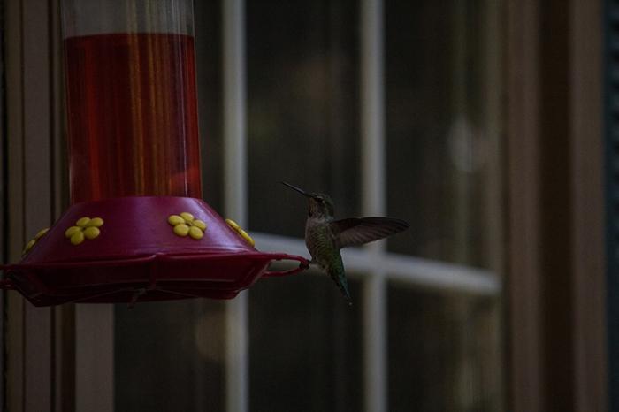 hummingbird2sm