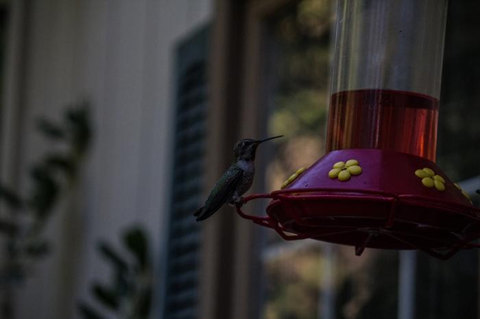 hummingbird3sm