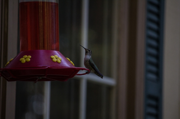 hummingbird6sm