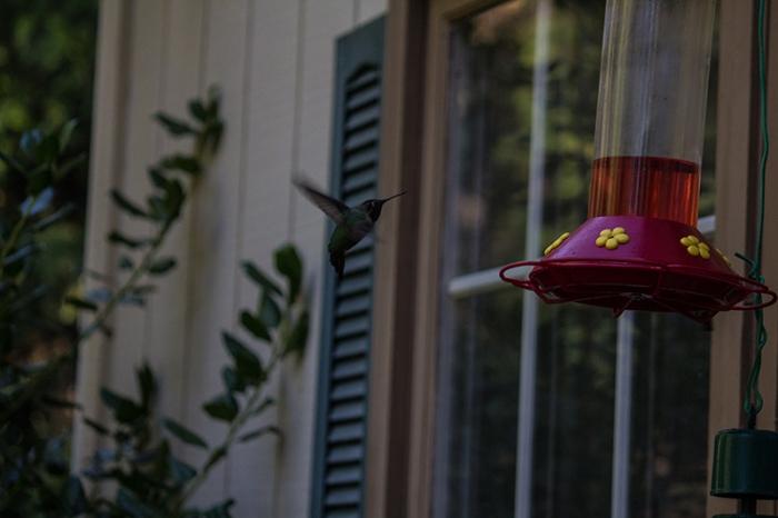 hummingbird9sm