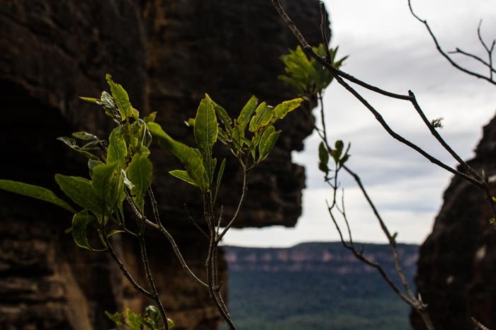leavessm
