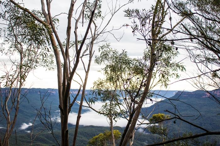 treessm